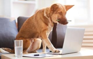 avere un blog aiuta cane laptop Diego Favaretto Web designer